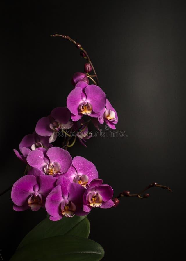 Orchidée de floraison images stock