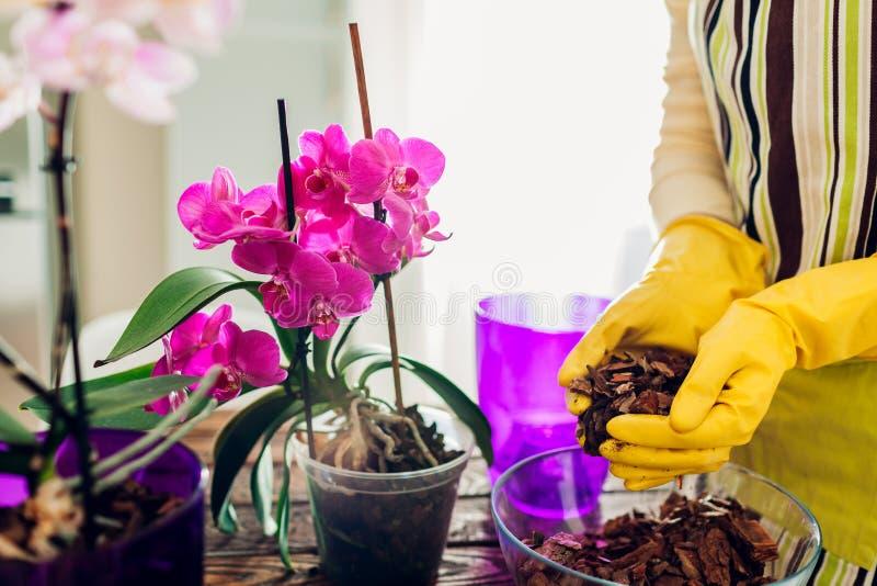 Orchid?e de transplantation de femme dans un autre pot sur la cuisine Femme au foyer prenant soin des plantes et des fleurs ? la  image libre de droits