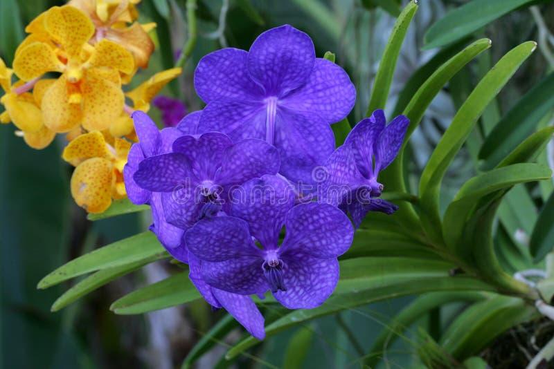 Orchidée en été photographie stock