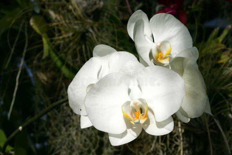 Orchidée en été images stock