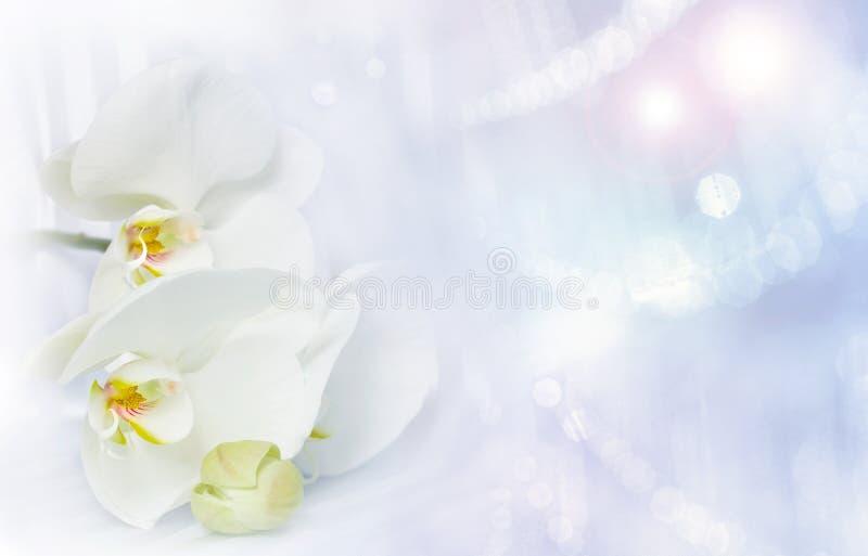 Orchidée et lumières blanches photo stock