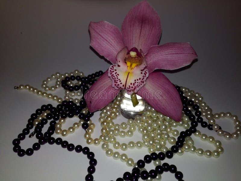 Orchidée parfaite et perles roses et pourpres images libres de droits
