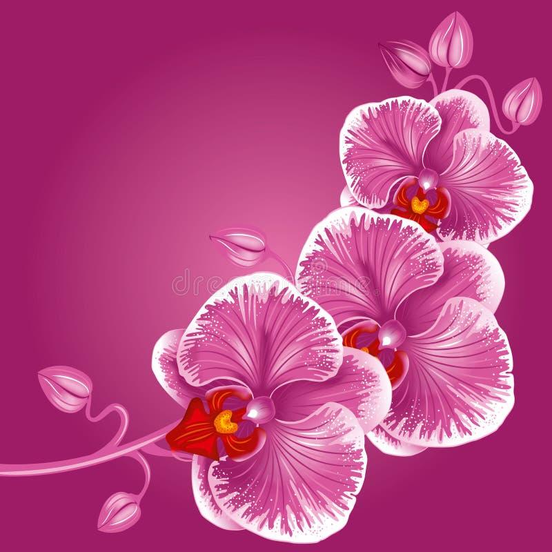 Orchidée pourprée illustration libre de droits
