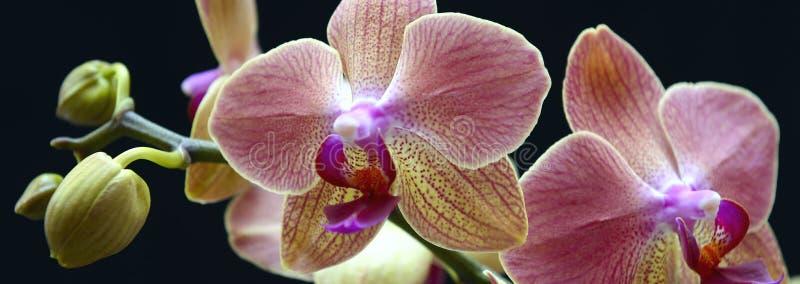Download Orchidée rose image stock. Image du jour, centrale, rose - 45359273