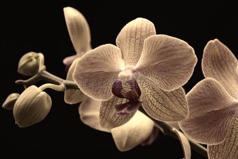 Download Orchidée rose image stock. Image du isolement, ressorts - 45359499