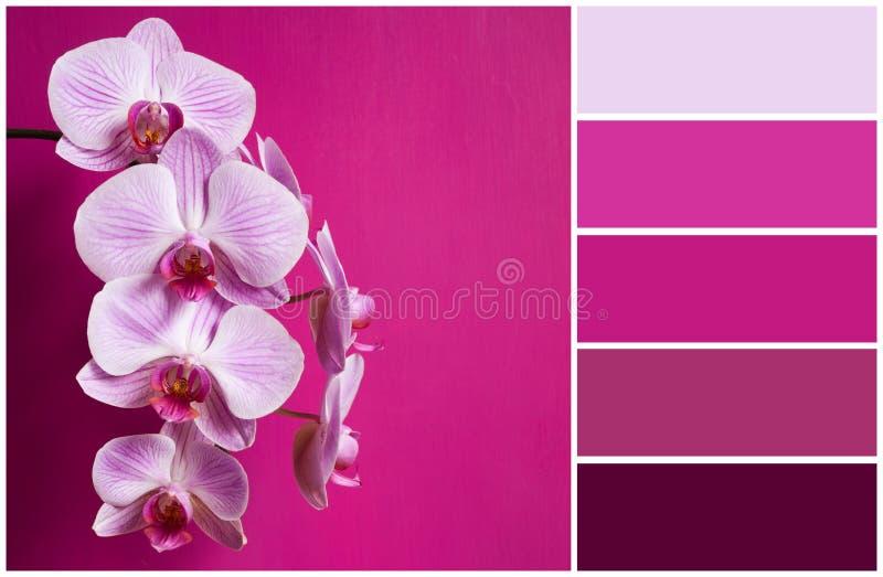 Orchidée rose (alette de couleurs) photographie stock libre de droits