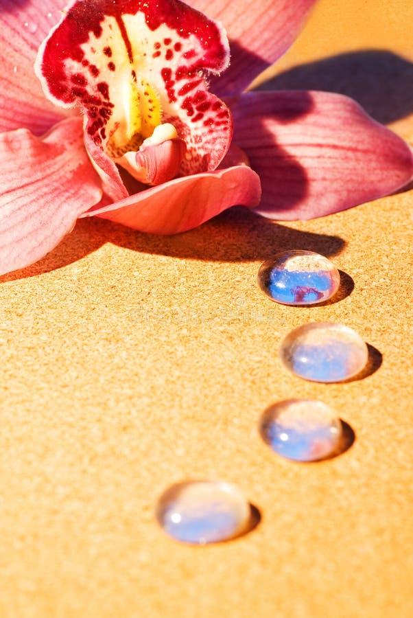 Orchidée Rose Avec Des Baisses De Rosée Images libres de droits