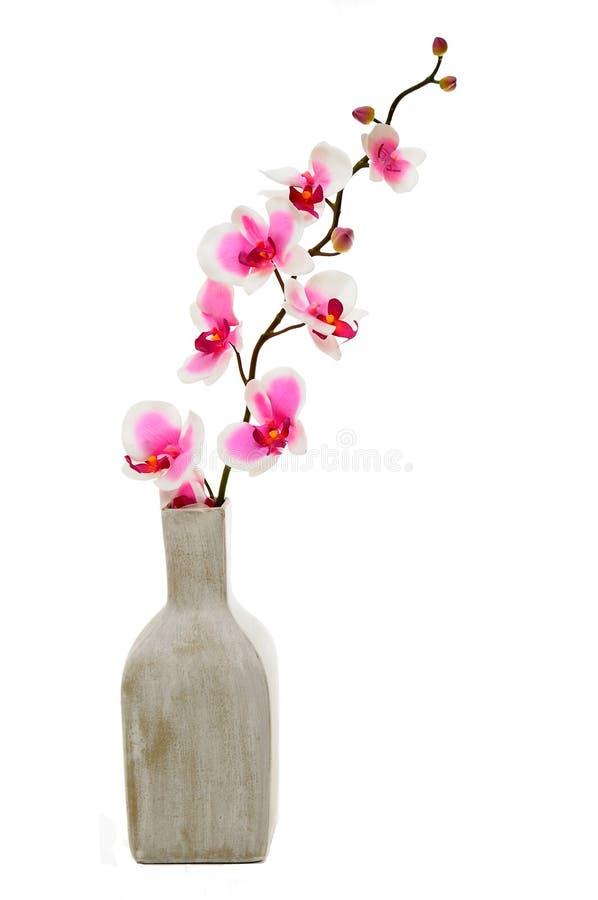 Orchidée rose dans le vase photos stock