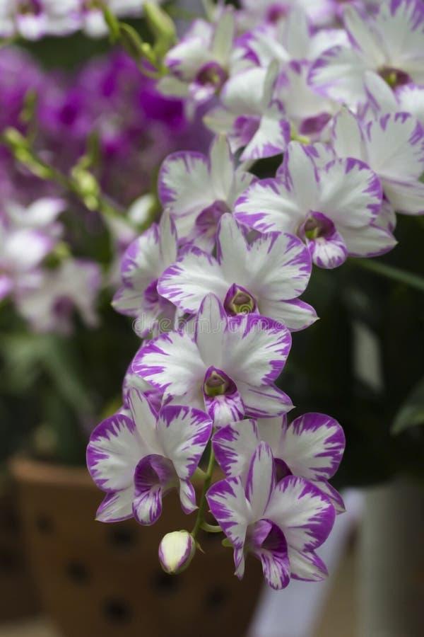 Orchidée rose sur le fond hors focale photo stock
