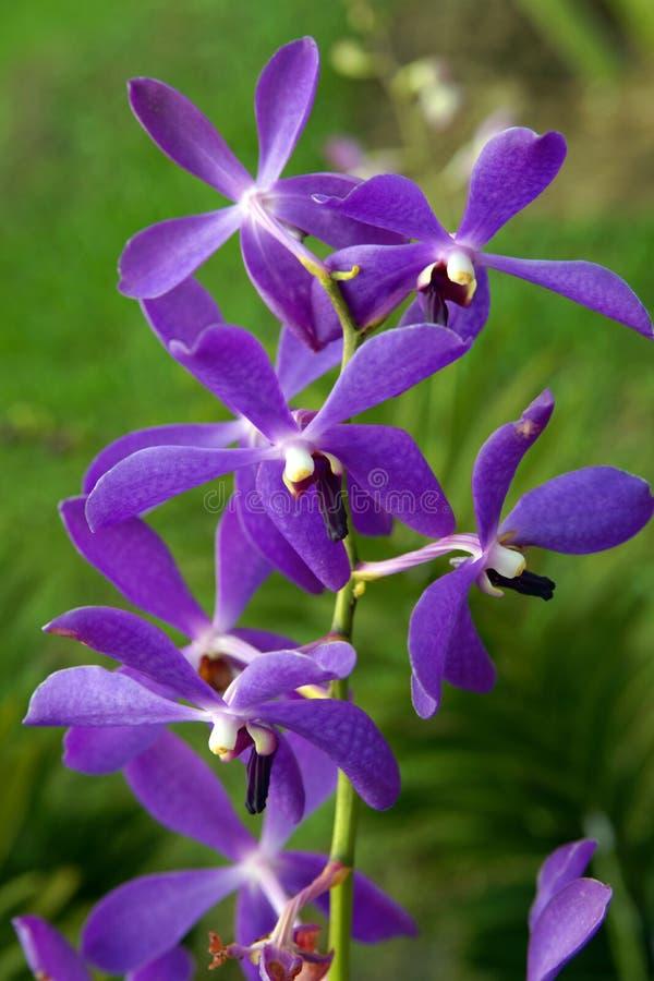 orchidee sauvage scene