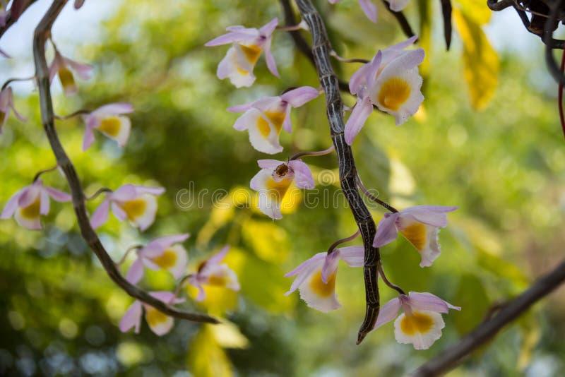 orchidee sauvage fleur jaune