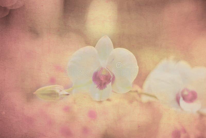 Orchidée sur le vieux papier grunge photographie stock libre de droits