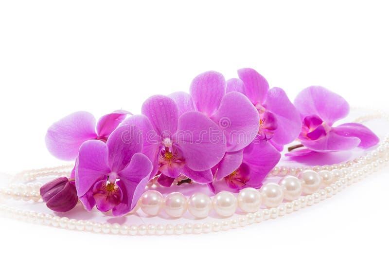 Orchidée Une branche des orchidées et des perles roses image stock