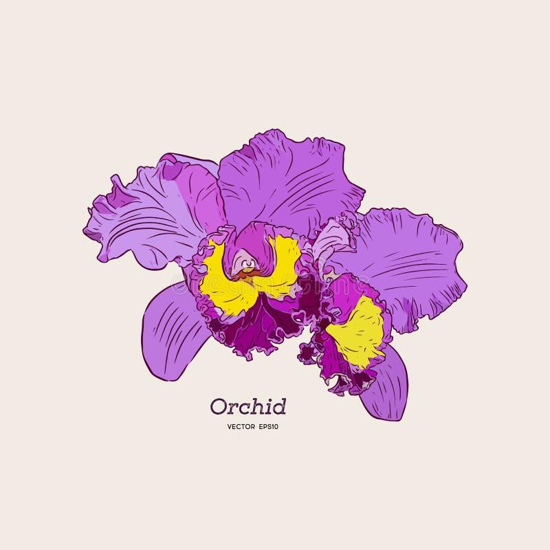 Orchidée violette et jaune vecteur de croquis d'aspiration de main illustration libre de droits