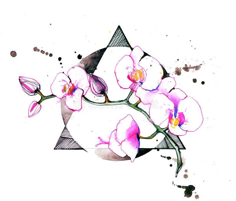 orchidées illustration de vecteur