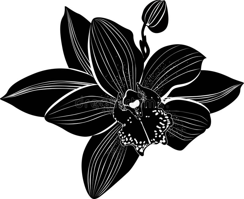 Orchidées illustration de vecteur