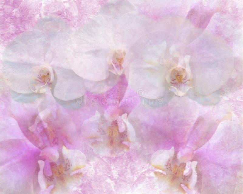Orchidées photographie stock libre de droits