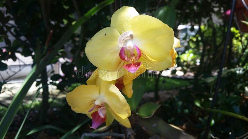 orchidées images stock