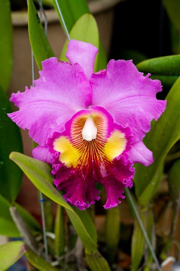 Orchidées dans le jardin photos stock