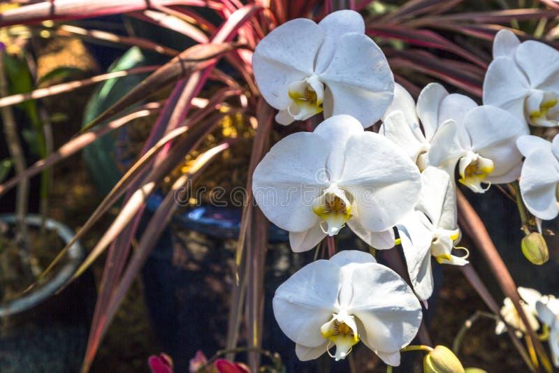 Orchidées de floraison photos stock
