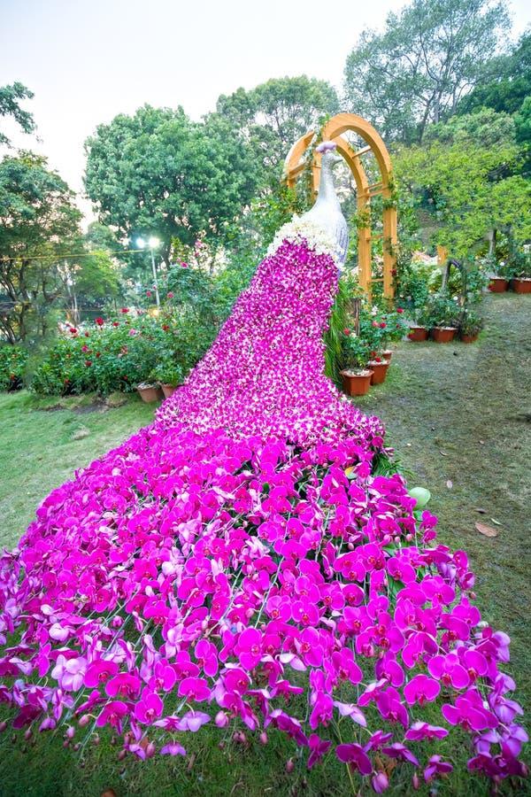 Orchidées de paon d'Arpet décorées images stock