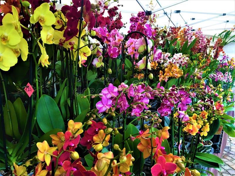 Orchidées enchantantes, beauté, nature et magie images libres de droits