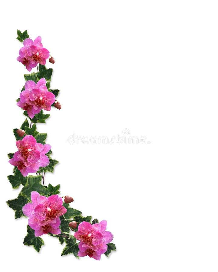 Orchidées et cadre de lierre illustration de vecteur
