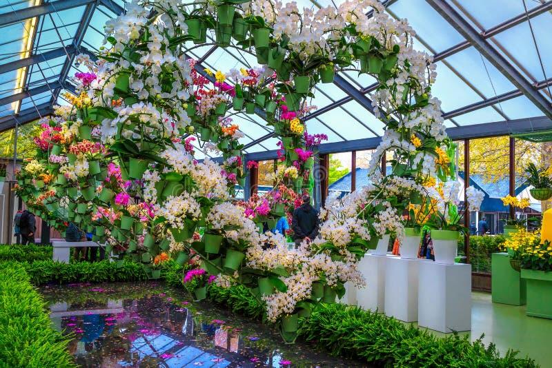 Orchidées et fleurs colorées de ressort dans le fleuriste, Pays-Bas images libres de droits