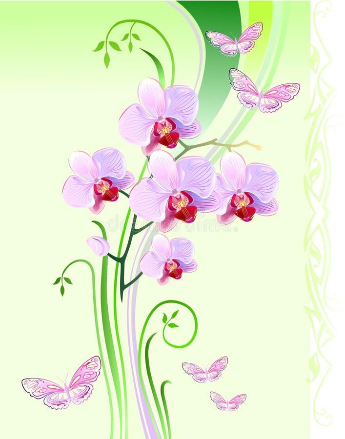 Orchidées et guindineaux illustration stock