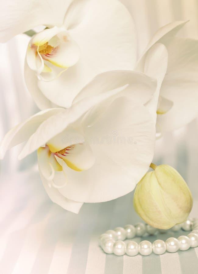 Orchidées et perles photos libres de droits