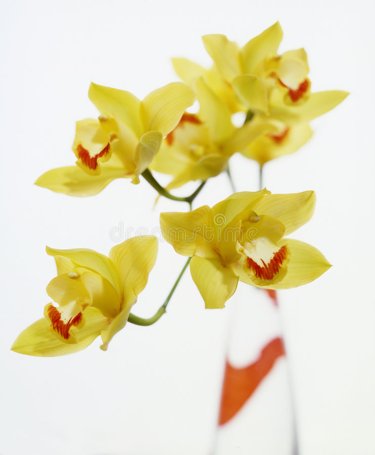 Orchidées jaunes images stock