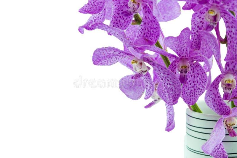 Orchidées roses de mokara dans le vase d'isolement sur le fond blanc image libre de droits