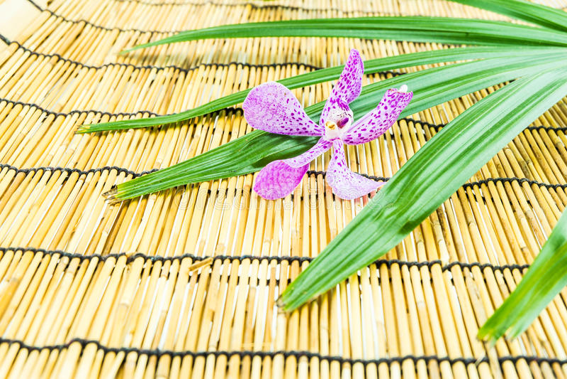 Orchidées roses de mokara sur le fond en bambou photographie stock libre de droits