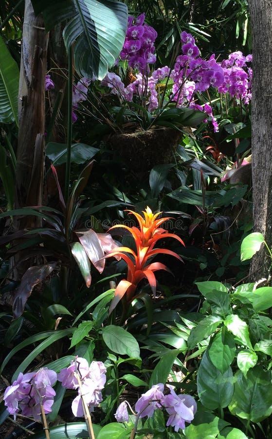 Orchidées roses et bromélias oranges dans un jardin image stock