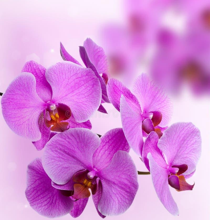 Orchidées roses sur le fond abstrait photos stock