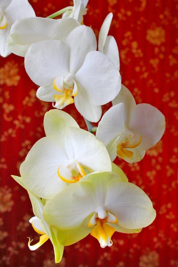 Orchidées roses sur le fond du papier peint luxueux photo libre de droits