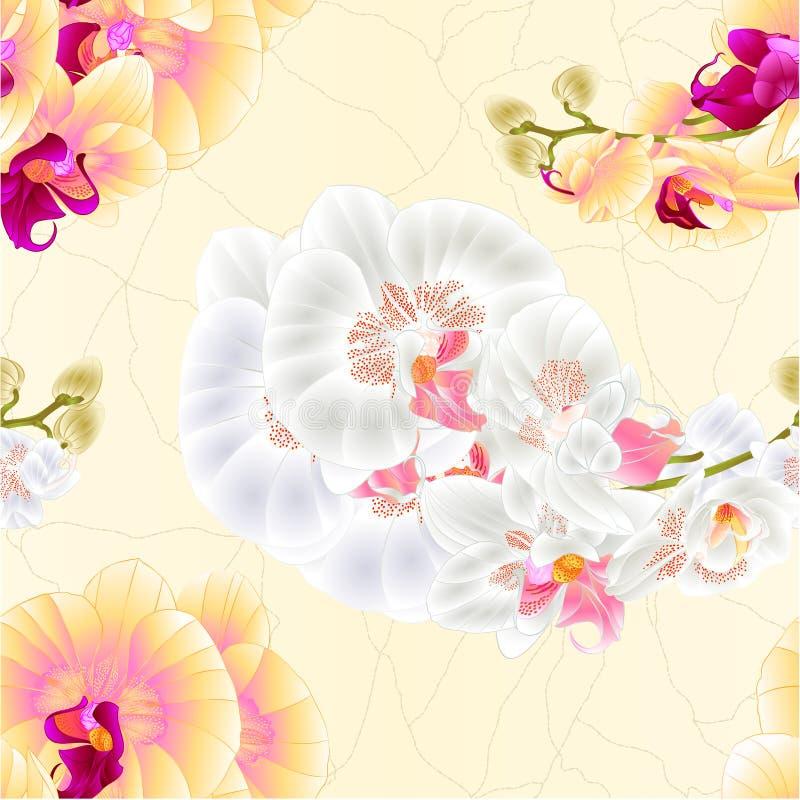 Orchidées sans couture de tige de texture jaunes et illustration botanique de vecteur de vintage de plante tropicale de Phalaenop illustration libre de droits