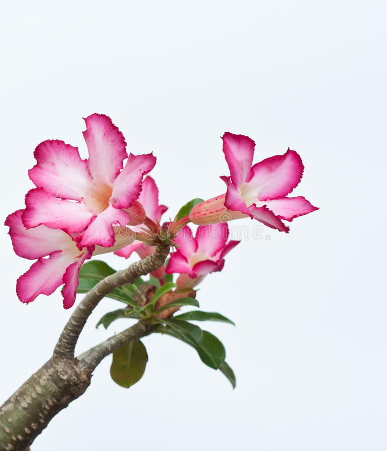 Orchidées sauvages images stock