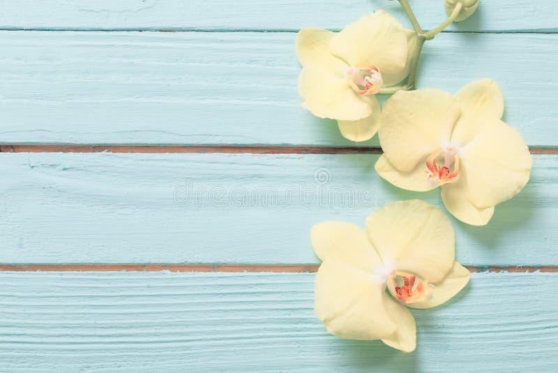 orchidées sur fond de bois bleu images libres de droits