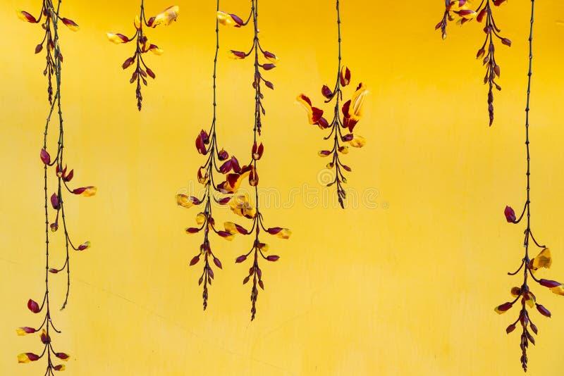 Orchidées suspendues sur fond de mur jaune images libres de droits