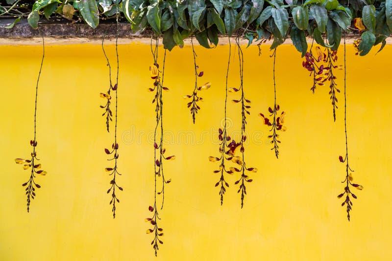 Orchidées suspendues sur fond de mur jaune image libre de droits