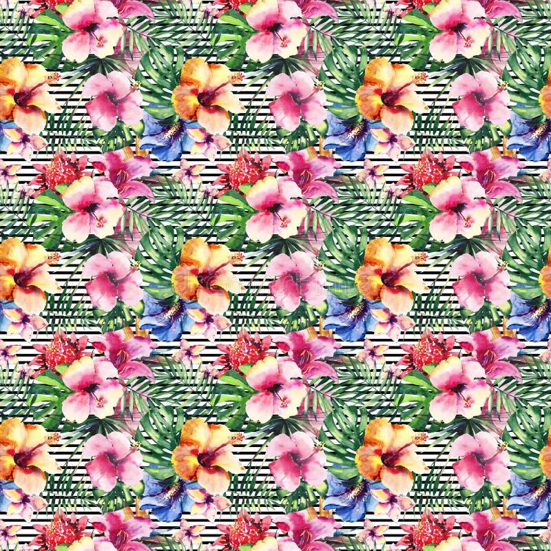 Orchidées tropicales de ketmie de fleurs de bel été de fines herbes floral tropical coloré tendre merveilleux sophistiqué lumineu images libres de droits