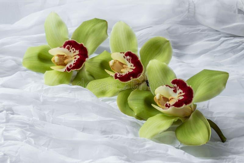 Orchidées vertes - d'isolement - fond blanc image libre de droits