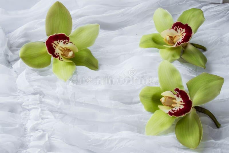 Orchidées vertes - d'isolement - fond blanc images libres de droits