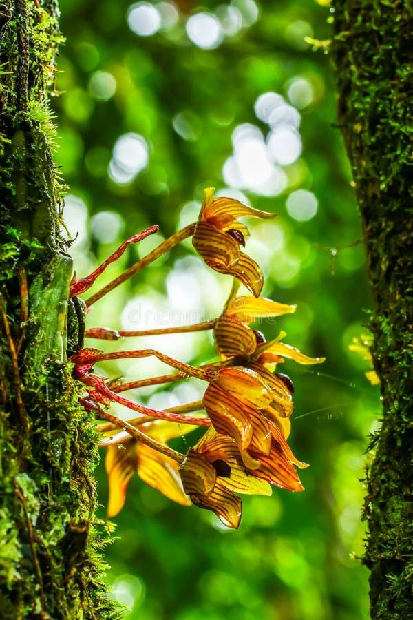 orchid άγρια περιοχές στοκ εικόνες