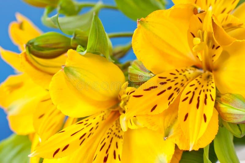 orchid άγριος κίτρινος στοκ φωτογραφία με δικαίωμα ελεύθερης χρήσης