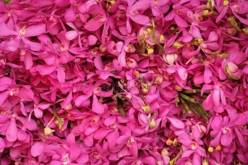orchid ανασκόπησης ροζ στοκ φωτογραφία