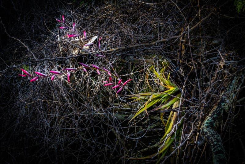 Orchid- απόψεις του Κουρασάο στοκ εικόνα