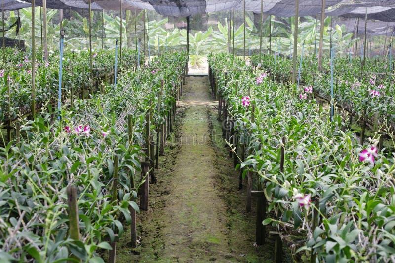 orchid βρεφικών σταθμών φυτό στοκ φωτογραφίες με δικαίωμα ελεύθερης χρήσης