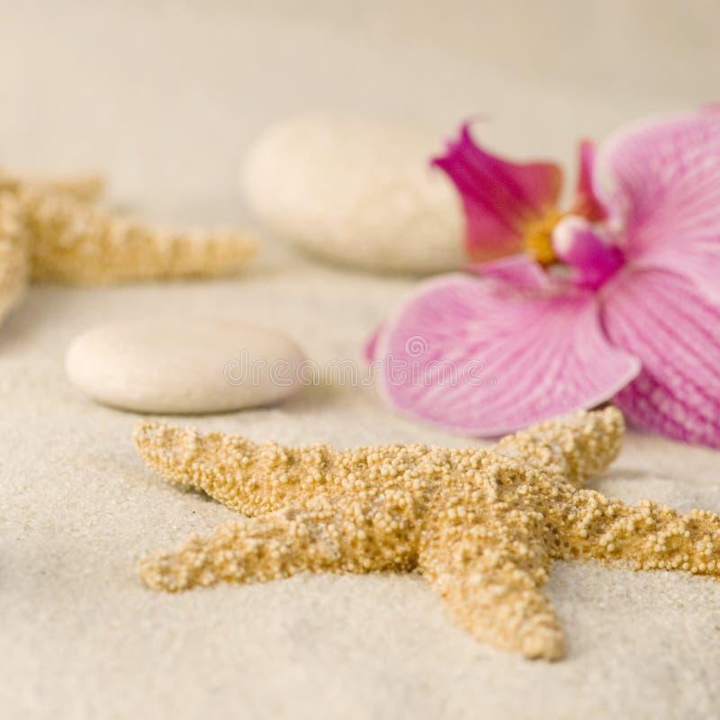 orchid ζωής ακόμα στοκ φωτογραφία με δικαίωμα ελεύθερης χρήσης